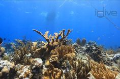 Grand Cayman's south coast is home to some of the most spectacular sites scuba divers can find anywhere.