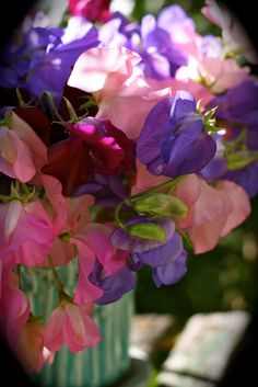 It's That Time Again - making a list - Sweet Pea seeds