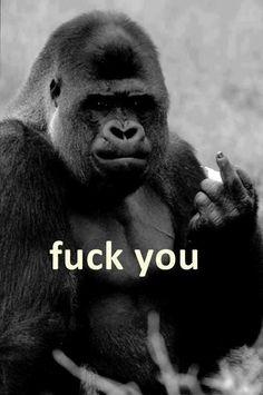 I love gorillas. Monkey Art, Pet Monkey, Monkey Pictures, Funny Animal Pictures, Nature Animals, Animals And Pets, Cute Baby Animals, Funny Animals, Gorilla Tattoo
