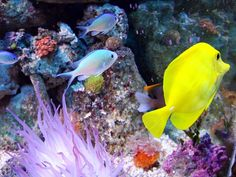 Facts About Saltwater Fish