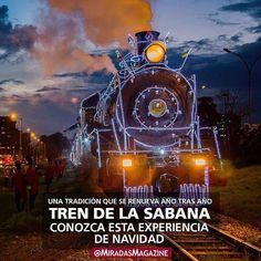 Actualidad\  Cada Navidad acercándose el 24 de diciembre el tren turístico de la Sabana iluminado por Davivienda enciende sus luces para alumbrar su recorrido por las calles de Bogotá. . . Sigue leyendo en miradas.com.ve [enlace de bío]