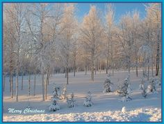 Photograph Blank Greeting Card Merry Christmas Alaska by MYSAVIOR, $3.50