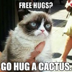 Free hugs? Go hug a cactus!