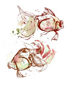 Amy Holliday Illustration: Fish Studies:  drawing, watercolours and ink.