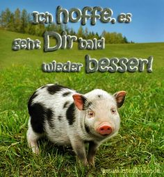 Ten Fascinating Facts About Pigs Mini Pigs, Guy, Diabetic Dog, Get Well Soon, Dog Snacks, Woodland Party, Black Spot, Fun Facts, Youtube