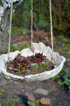 Using a concrete bowl (made from a rhubard leaf) as a succulant plant holder. Would be lovely as a bath or food holder för birds.