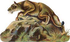 Glanzbilder - Victorian Die Cut - Victorian Scrap - Tube Victorienne - Glansbilleder - Plaatjes : Tiere - animal - animaux