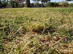 We can help with your winter grass woes and return your lawn to its beautiful condition. Poa Annua is a hugs problem in Perth - We Can Help!