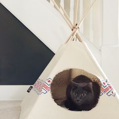 Need to figure out a way to DIY this bad boy for my kittehs