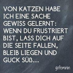 #katzen #tiere #spruch