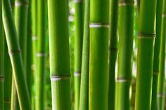 Le bambou: il est vraiment partout! Du sol au plafond, de la salle de bain au salon, de la cosmétique à l'assiette... Le bambou est le matériau du moment. Écologique, économique et esthétique: on se demande même pourquoi on n'y a pas pensé plus tôt! Lire la suite: http://www.webdeco.be/dossiers-deco-fr/le-bambou-il-est-vraiment-partout.htm