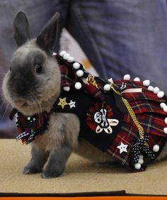During this competition in Yokohama City, Japan bunnies are not judged by their ear-floppiness or their tails' resemblance to a cotton ball. On the contrary, this contest is all about how chic your rabbit looks. Owners from across the country  bring their rabbits dressed in the sharpest styles in hopes of landing the top prize. Credit:   Yoshikazu Tsuno/AFP/Getty Images