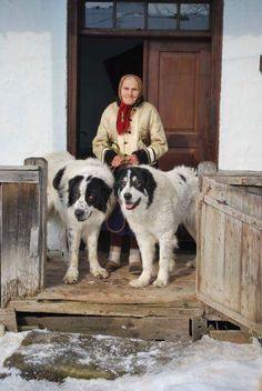 Ciobanesc de Bucovina / Bucovina Shepherd Dog