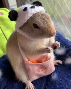 Cute Little Animals, Cute Funny Animals, Funny Cute, Cute Cats, Animal Jokes, Funny Animal Memes, Funny Animal Pictures, Funny Humor, Funny Hamsters