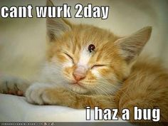 Image result for picture cat i haz a pleased with myself