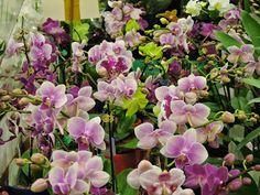 expo flores de holambra em salvador orquideas