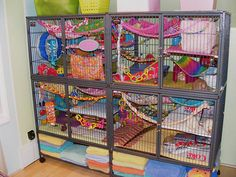 Apparently towels are the best rat cage floor covering out there...I am seeing a trend here! UI like how bright and colorful it all is too! Pet Rat Cages, Pet Cage, Bird Cages, Chinchilla Cage, Ferret Cage, Critter Nation Cage, Dumbo Rat, Pet Paradise, Fancy Rat