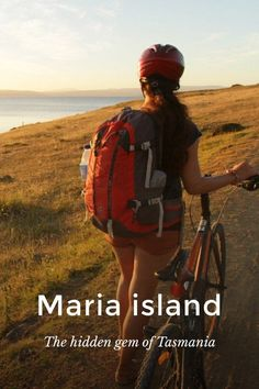 Ever heard of Maria island? Check out our stellar story and book your flight Top Travel Destinations, Travel Tips, Travel Ideas, Cute Wombat, Australia Country, New Zealand Travel, Travel Articles, Plan Your Trip, Countries Of The World