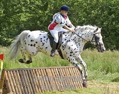 cross country horse jumping Kirby looks like your polka dotted pony! Cross Country Jumps, Equestrian Outfits, Equestrian Style, Equestrian Fashion, Horse Accessories, Appaloosa Horses, Show Jumping, Horse Love, Beautiful Horses