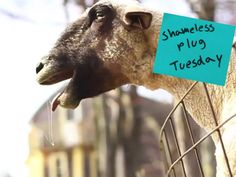 YOUTUBE GOLD: GOATS YELLING LIKE HUMANS     How about...take your Harlem Shake videos, f*ck them, cause goats yelling like humans are way funnier and less annoying.