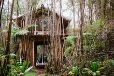A Tiny Treehouse on The Big Island