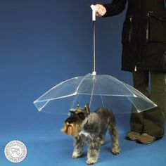 Better keep your dogs dry during all the rain! Dogbrella. #uniquegifts