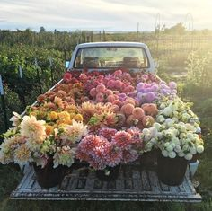 This bunch of flowers on a truck is the perfect floral inspiration. Bunch Of Flowers, My Flower, Pretty Flowers, Flower Truck, Fresh Flowers, Potted Flowers, Images Of Flowers, Field Of Flowers, Pink Flowers