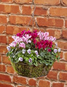 Excellent Free outdoor Hanging Baskets Popular Hanging baskets are a great way to create coloring plus theatre to your inviting wall or perhaps entry ways po. Winter Hanging Baskets, Plants For Hanging Baskets, Hanging Pots, Winter Container Gardening, Container Plants, Garden Basket, Garden Pots, Garden Ideas, Fall Potted Plants