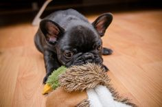 This duck shall be mine!