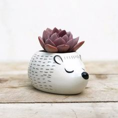 Sleepy Hedgehog Replace cactus with felt ball and use as pin cushion Ceramic Flower Pots, Ceramic Planters, Ceramic Clay, Planter Pots, Hedgehog Pet, House Plants Decor, Clay Animals, Clay Pots, Planting Succulents