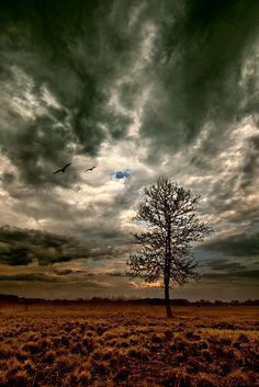 Awesome photo of two birds, sky, clouds and tree. Check out the aperture of this photo.