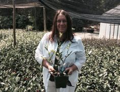Grower Feature Camellia Forest Nursery Christine