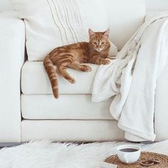 "Ill relax and ""supervise"" while you design our new Kitchen with the Kitchen Planner by Direct Online Kitchens. Shabby Chic Stencils, World Cat, Kitchen Planner, Temporary Wallpaper, Kinds Of Cats, Orange Cats, Ginger Cats, Stencil Designs, Crazy Cats"