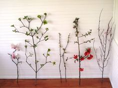 Week 19 // Slow Flowers Challenge with Flowering Branches Flower Branch, Branches, Design Projects, Floral Design, Challenges, Flowers, Plants, Diy, Bricolage