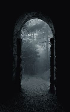 Mysterious Portal. Pathway into the Woods.