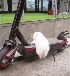 funny dogs and cats videos - funny dogs ; funny dogs with captions ; funny dogs and cats ; funny dogs and cats videos Cute Baby Dogs, Cute Dogs And Puppies, Baby Puppies, Funny Babies, Funny Dogs, Funny Puppies, Yorkie Dogs, Cutest Dogs, Doggies