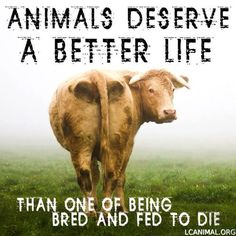 animals deserve a better life than one of being bred and fed to die #vegan #ethics