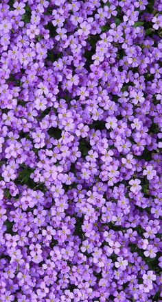 Purple Aesthetic Discover Wallpaper Backgrounds Wallpapers 35 Most Beautiful Flower Wallpapers