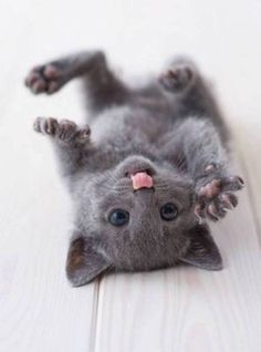 Tickle the tummy❤️