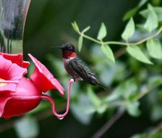 How to attract and feed hummingbirds. Grit magazine