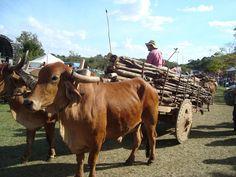 carro de bois | ... de semana de 19 a 21 de julho de 2013 o tradicional festival de carros