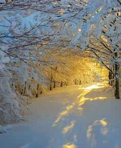 dear 2015...bring me some snow