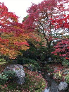 宝厳院(Autumn leaves of Hougon-in)