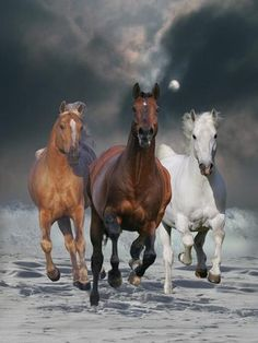 The Charmed Ones Photographic Print by Bob Langrish Beautiful Horse Pictures, Most Beautiful Horses, All The Pretty Horses, Animals Beautiful, Painted Horses, Horse Drawings, Cute Animal Drawings, Cavalo Wallpaper, Animals And Pets