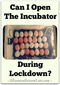 You how you often hear that you should never open an incubator after lockdown (the last three days before hatch)? Well...is that true? And what happens if you HAVE to open the lid?