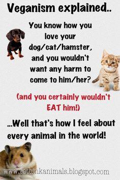 Pro vegan: Veganism explained