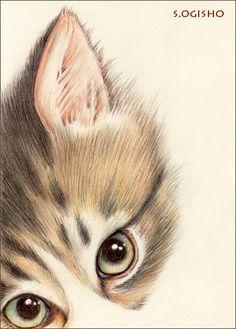 悪だくみ中 Chandelier Bedroom, Cat Boarding, Bedroom Kids, Here Kitty Kitty, Cat Drawing, I Love Cats, Art Oil, Cat Art, Cats And Kittens