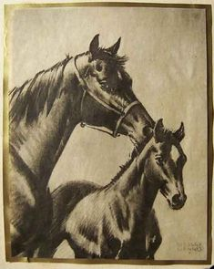 The Art of Wesley Dennis - Greeting Cards Horse Story, Horse Books, Horse Portrait, Vintage Horse, All The Pretty Horses, Creative Pictures, Equine Art, Animal Tattoos, Horse Art