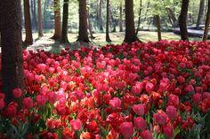 Spring in Arboretum