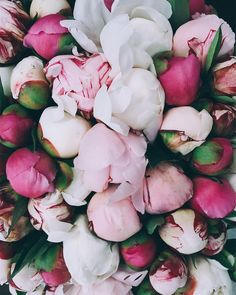 No photo description available. Nothing But Flowers, Fresh Flowers, Beautiful Flowers, Flower Box Gift, Flower Phone Wallpaper, No Rain, Flower Aesthetic, Pink Peonies, Flower Decorations
